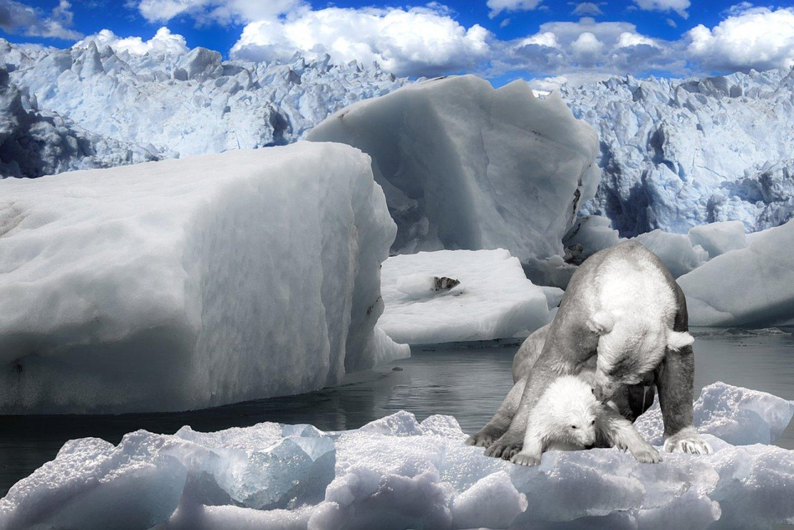 Aquest centre vol millorar les condicions de vida a l'Àrtic