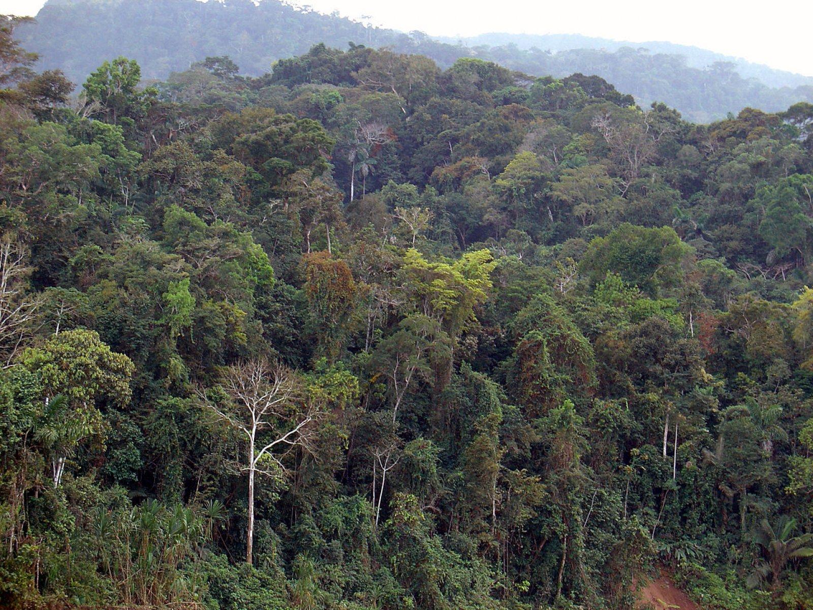 La selva amazònica al Perú