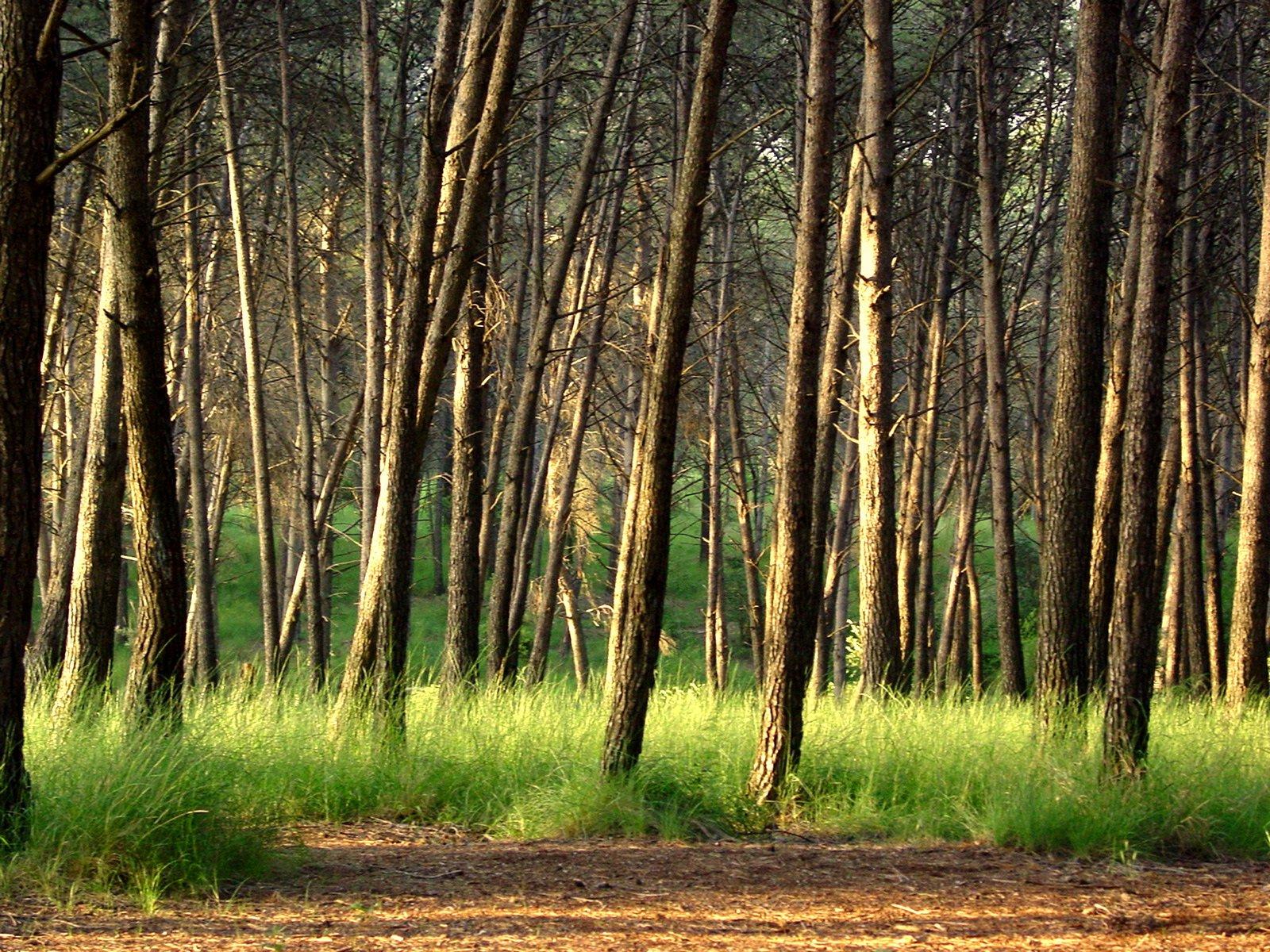 Bosc mediterrà