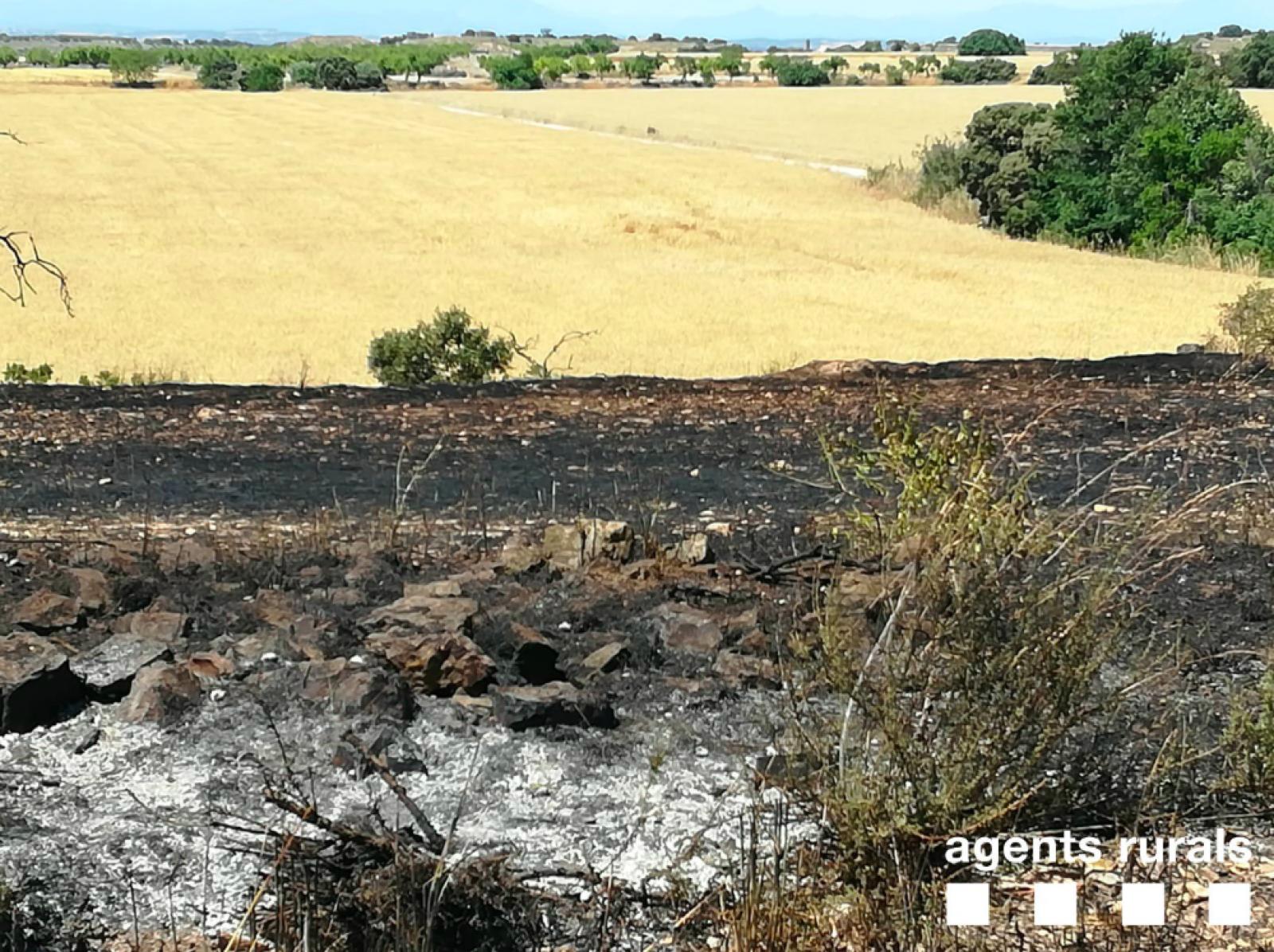Efectes de l'incendi en un camp d'ordi a Tàrrega (Urgell)