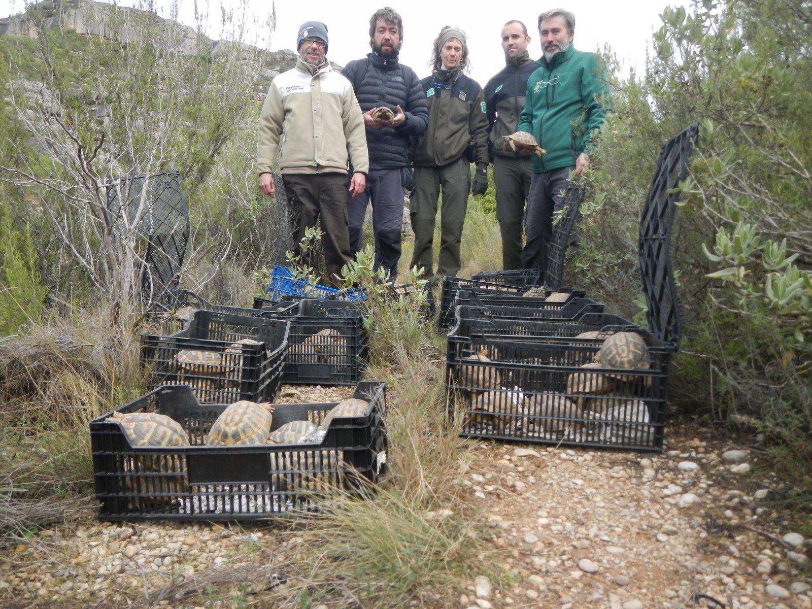Les tortugues mediterrànies poc abans de ser alliberades