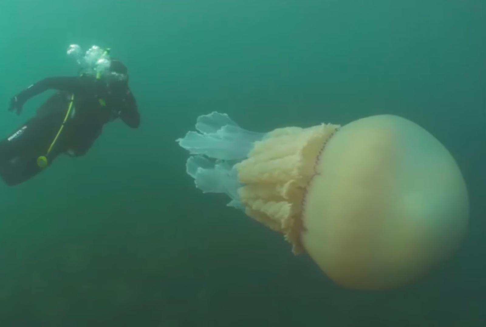 Lizzie Daly i la medusa gegant