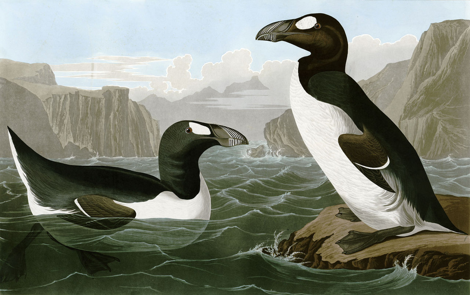 Pingüins boreals dibuixats per John James Audubon a 'The Birds of America' (1827–1838)