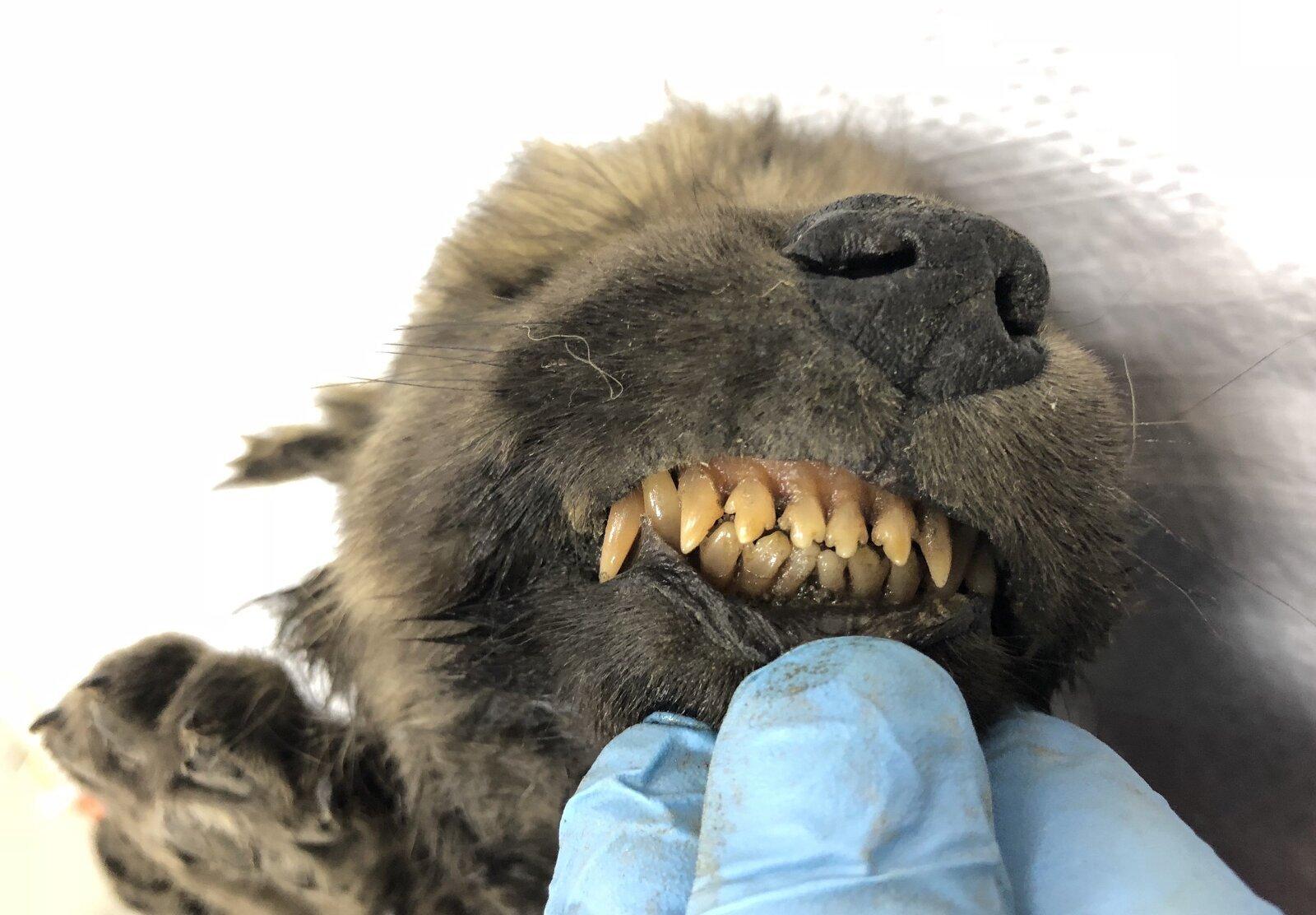 La cara de Dogor ha estat increïblement ben conservada pel permagel