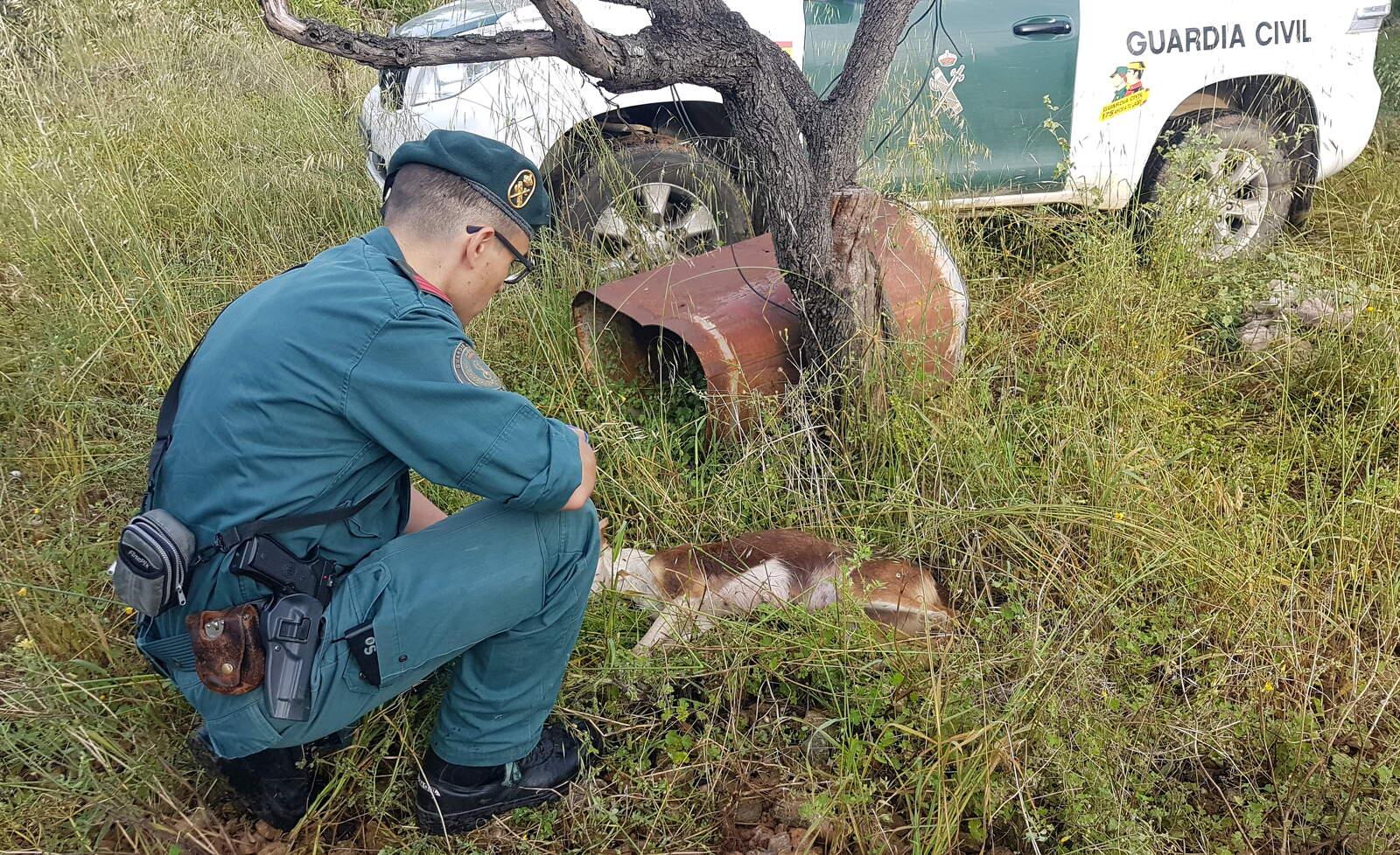 Un agent de la Guàrdia Civil agenollat al costat de la gossa morta