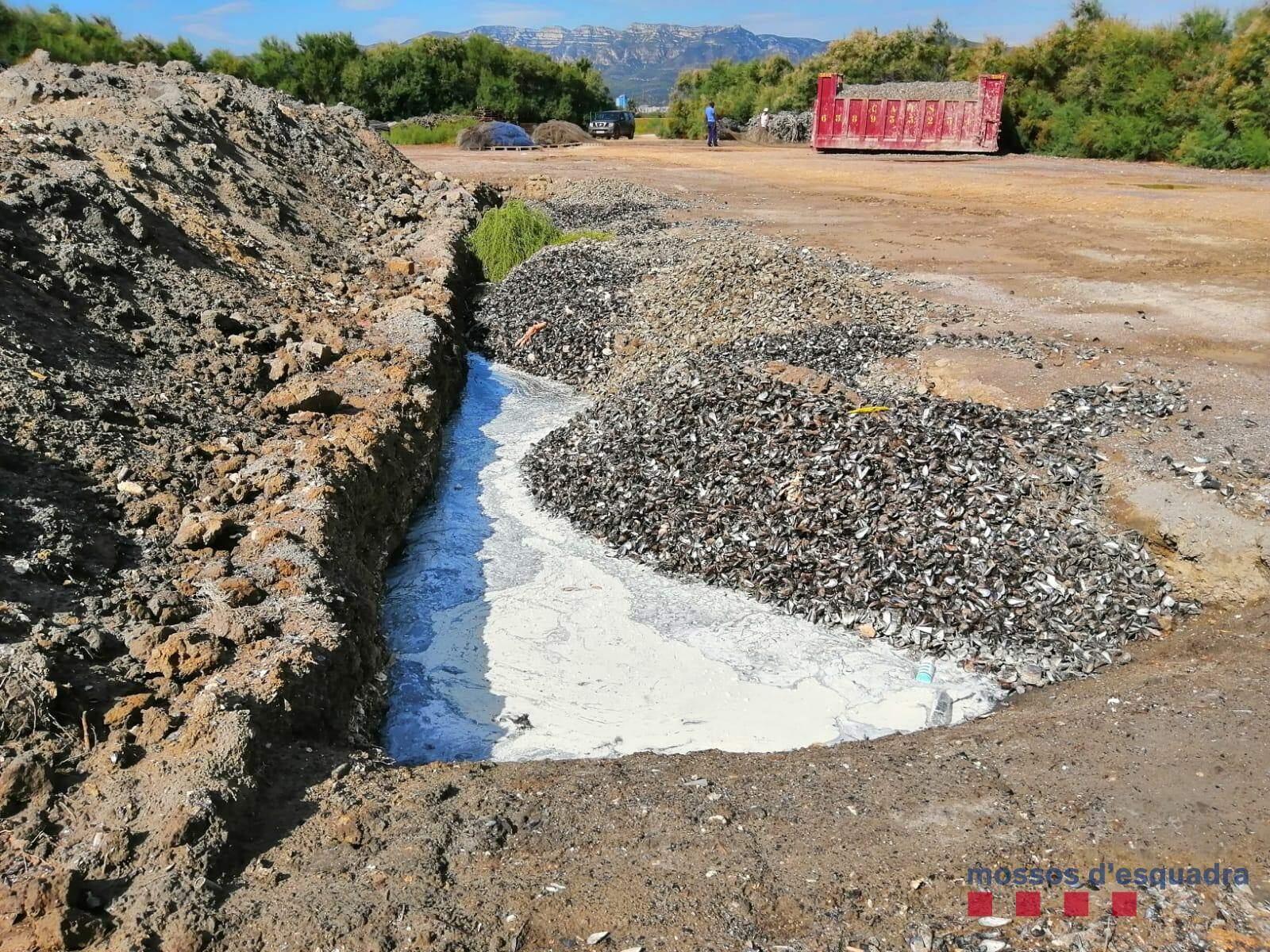 Al terreny s'hi abocaven restes de musclos i ostres