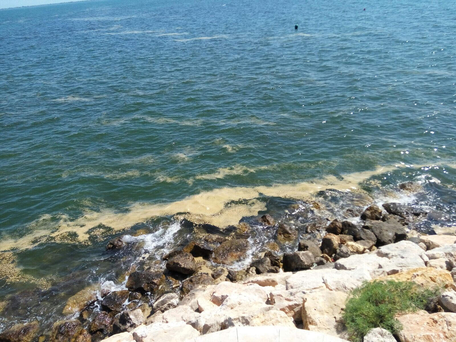 Mar amb taques generades per microalgues a la costa de l'Ampolla